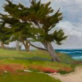 Pacific Grove Cypress